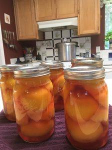 Seasonal Peaches
