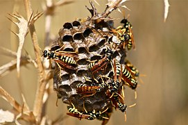 it-wasp-swarm-186660__180