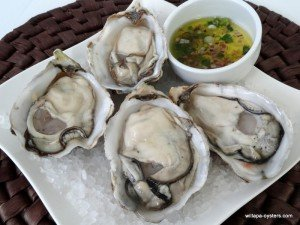 willapa-pacific-oysters-large-10